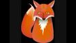 Safari Island Fox