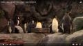 Saint Louis Zoo Penguins