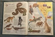 The Animal Atlas (4)