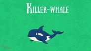 Bonny Wondy Killer Whale