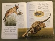 Desert Animals (Over 100 Questions and Answers to Things You Want to Know) (5)