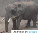 Milwaukee County Zoo Elephant
