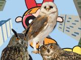 The Powerpuff Owls