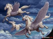 Pegasuses or Pegasi