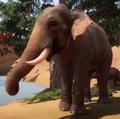 Planet Zoo Indian Elephant