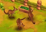 Red-kangaroo-zoo-2-animal-park