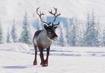 Reindeer-planet-zoo