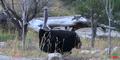 Utah Hoogle Zoo Ostrich