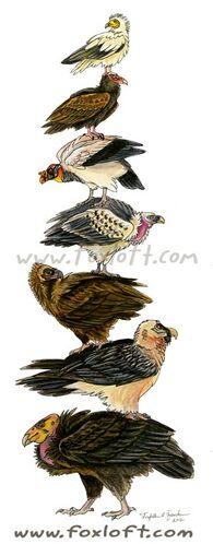 Vulture Stack.jpg