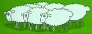 Zoo-cup-002-sheep