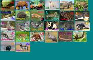 Animal Alphabet 5