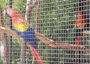 Scarlet macaw in arizona's wildlife world zoo