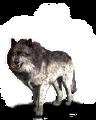 Tw3 journal wolf