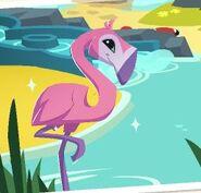 AJ Flamingo