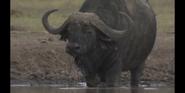 CITIRWN Buffalo