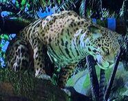 Central American Jaguar ZTX