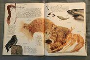 DK Encyclopedia Of Animals (32)