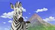 JEL Zebra