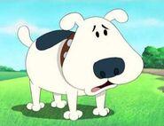 MTTDH Dog