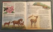 My First Book of Animals from A to Z (11)