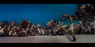 Oceans 2010 Spider Crabs