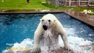 Preposterous Pets Polar Bear