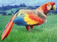 Scarlet macaw switch zoo