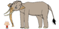 Stanley Griff meets Asian Elephant