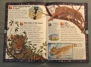 Wild Cats and Other Dangerous Predators (6)