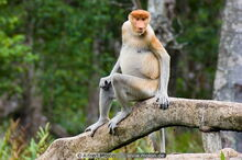 P monkey.jpg