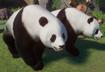 Panda, Sichuan Giant (Planet Zoo)