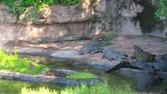 SML Crocodiles
