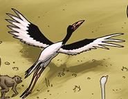 Saddle-Billed Stork in TLK Wild Schemes and Catastrophes
