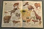 The Animal Atlas (16)
