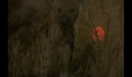 WAET Hyena
