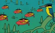 Batw 017 bird crabs