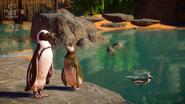 Planet Zoo African Penguin