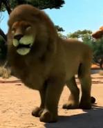 Transvaal-lion-zootycoon3