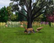 WP2 Roe Deer