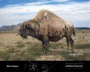 Acient Bison