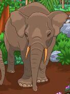 BTKB Elephant