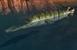 Garfish IC