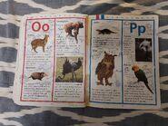 My Animal Sticker Dictionary (14)