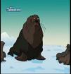 TWT Fur Seal