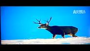 UTAUC Mule Deer