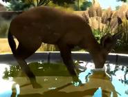 Bushbuck-zootycoon3