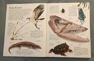 DK Encyclopedia Of Animals (8)