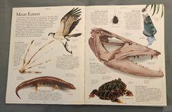 DK Encyclopedia Of Animals (8).jpeg