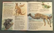 My First Book of Animals from A to Z (13)