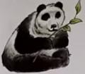 Panda usborne my first thousand words